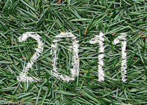 Het jaar 2011 op dennennaalden
