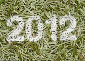 Het jaar 2012 op dennennaalden