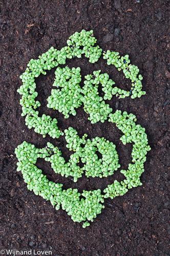 Foto van dollar gemaakt van plantjes