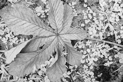 Infraroodfoto van een afgestorven blad