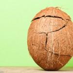 Opengemaakt kokosnoot in oorspronkelijke vorm