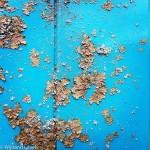 Algen op een blauw bord in de Amsterdamse Waterleidingduinen