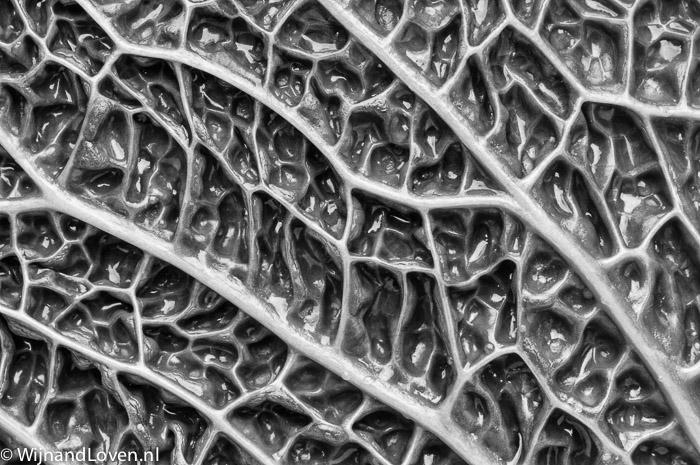 Zwart-wit foto van een landschap op een blad van een savooiekool
