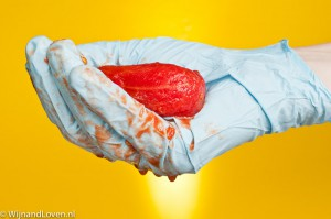 Conceptfoto voor genetisch gemodificeerd voedsel: een hand in een latex handschoen draagt een tomaat.