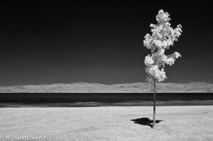 Infraroodfoto van een eenzame boom in Italië.