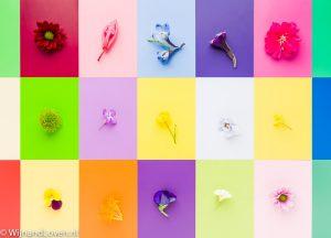 Kleurenkaartje - met bloemen.